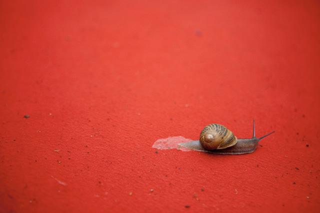 Un escargot sur le tapis rouge (c) Sébastien Dolidon