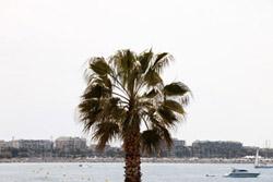 Un palmier sur la Croisette
