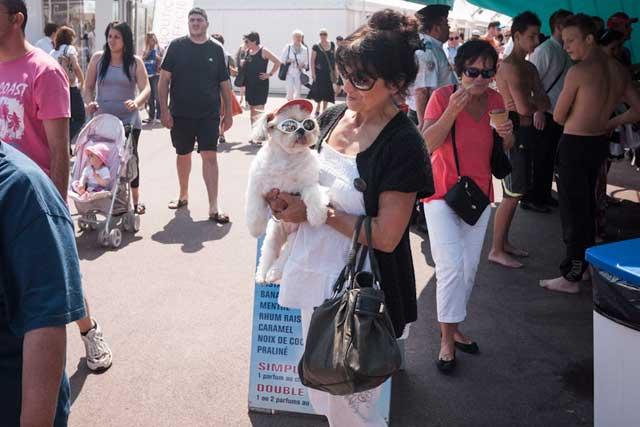 Petit chien cannois (c) Cannes Snapshots