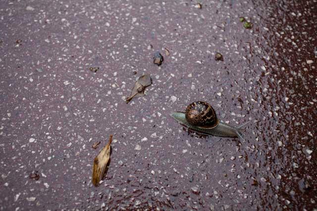 Tandis que revoilà l'escargot cannois (c) Sébastien Dolidon