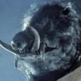 Bande-annonce de Razorback, film australien réalisé par Russell Mulcahy en 1984. Certains font des films d'horreur avec des serpents tueurs, d'autres avec des requins tueurs, quelques-uns avec des araignées tueuses…...