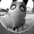 Court-métrage de jeunesse voué aux gémonies par Disney, <em>Frankenweenie</em> déroule, trente ans plus tard, sa version longue... Alléluia !