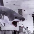 A l'heure où les requins croquent du touriste, Grand Écart fait le point sur ces films où des squales de plus en plus gigantesques font plus rire que peur. Plongez dans les eaux troubles du nanar estival !