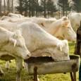 Il y a quelque chose en elle de Francesca de <em>Sur la Route de Madison</em>, de Clint Eastwood : même décor rural, même hasard déposé sur le pas de sa porte, mêmes balancements entre le désir et le devoir...